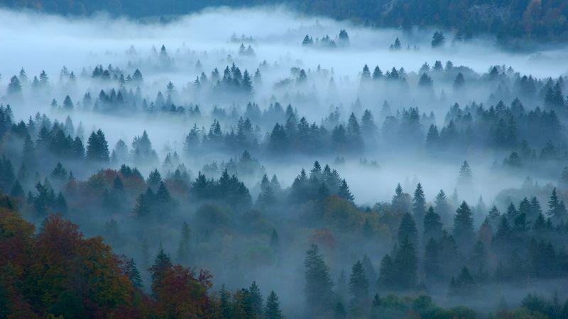 дымка, туман, лес (horizontal)
