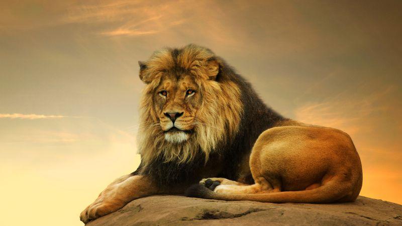 Картинки на рабочий стол на весь экран тигры и львы