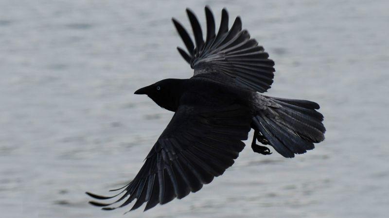 Фото хищных птиц в полете