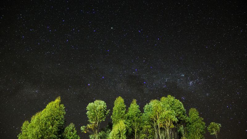 ночь, звезы, небо, деревья (horizontal)