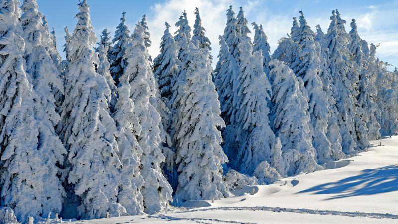 лес, снег, зима (horizontal)