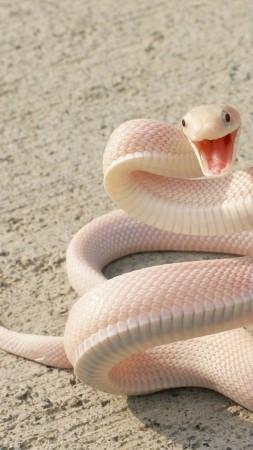 игра змея питон