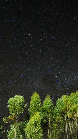 ночь, звезы, небо, деревья (vertical)