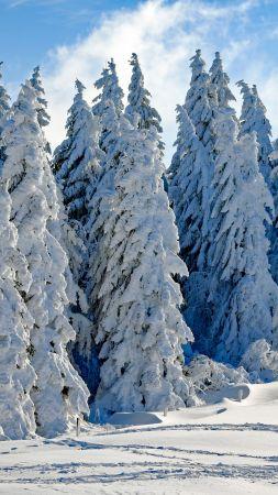 лес, снег, зима (vertical)