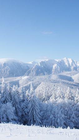 Зима Обои На Телефон Вертикальные Hd