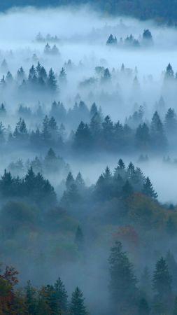 дымка, туман, лес (vertical)