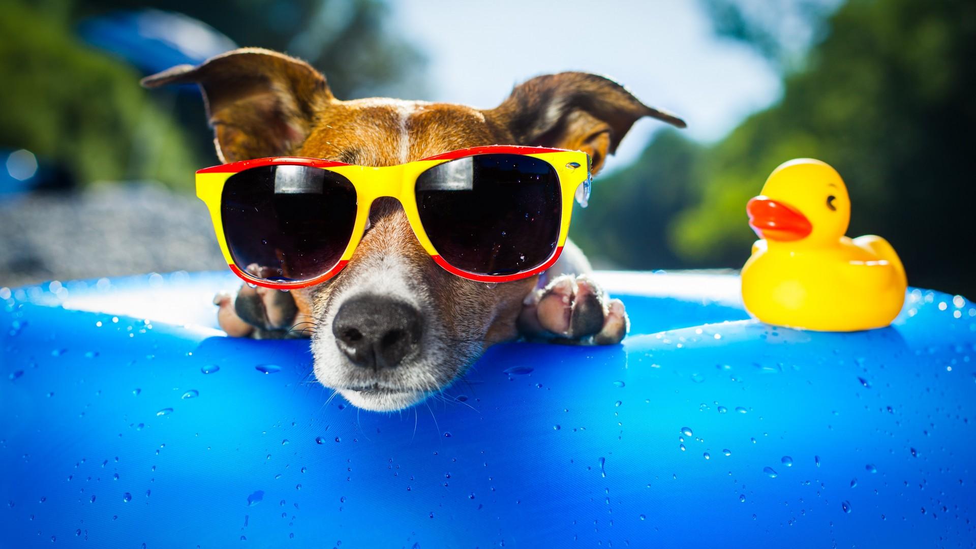 разу лето картинки красивые яркие веселые будет самым