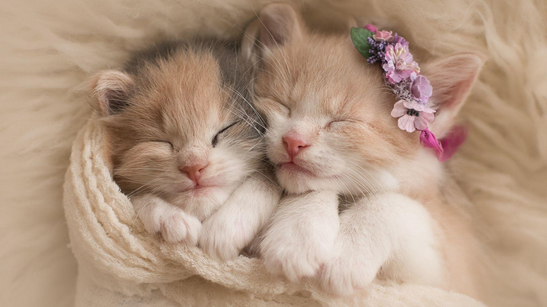 кошек смотреть картинки милых