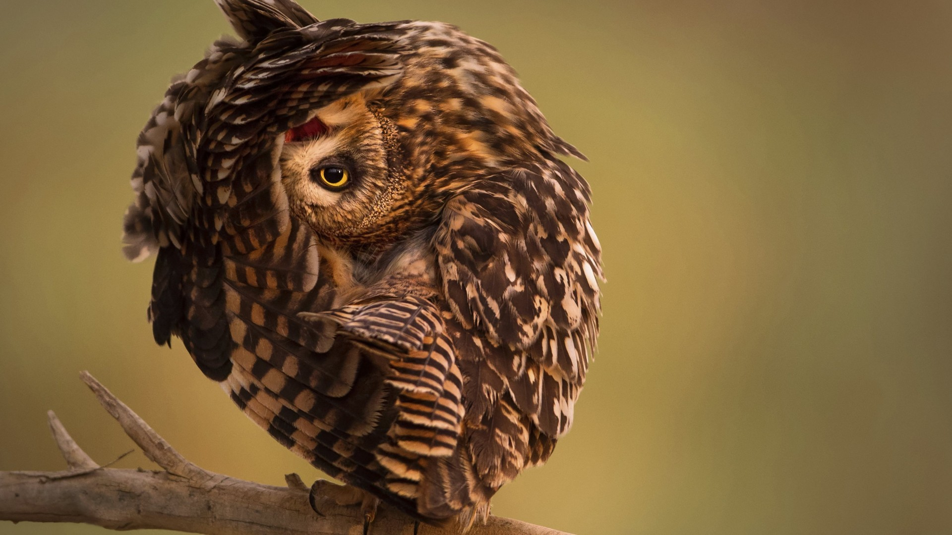 National Geographic, 4k, HD, сова, смешные, National Geographic, 4k, HD wallpaper, Owl, Funny (horizontal)