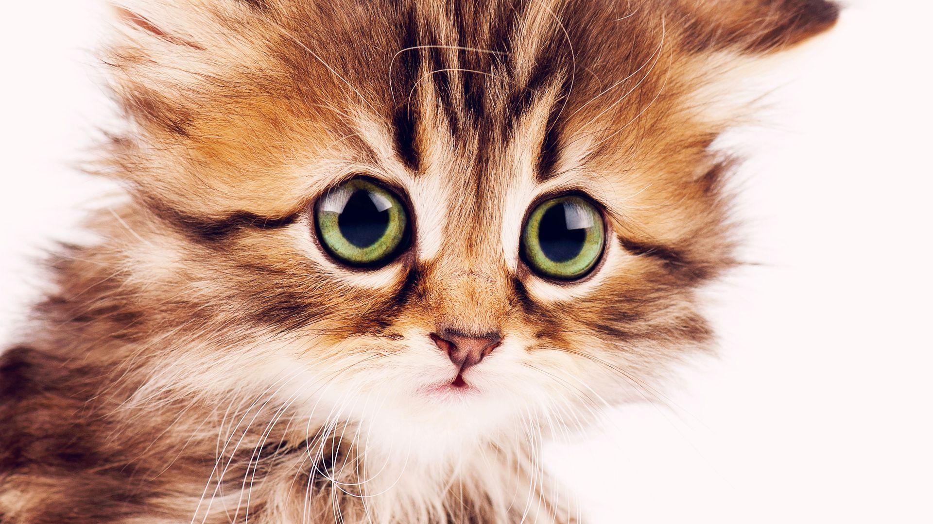 расположение рабочего прикольные котята картинки для айфон есть