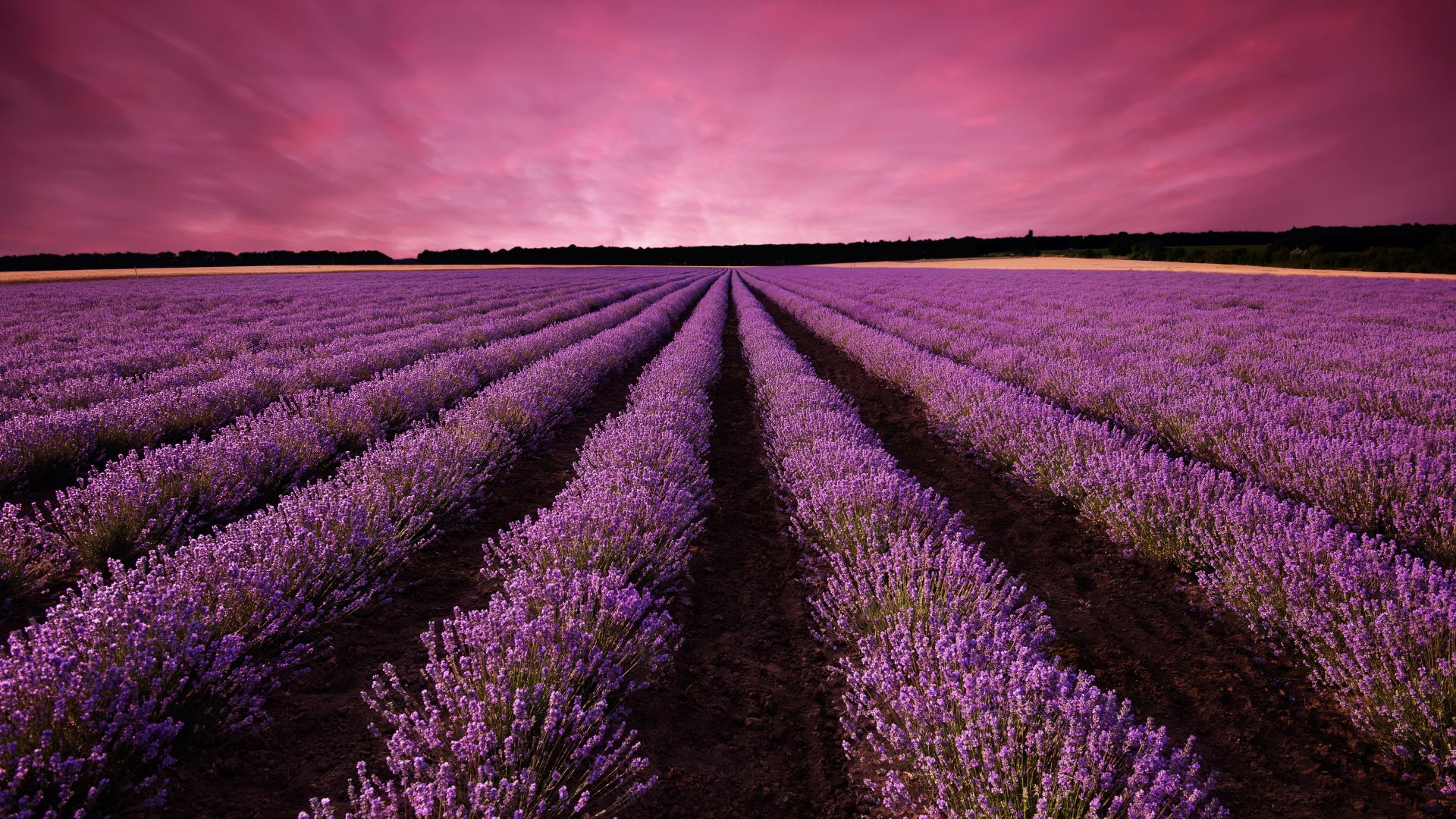 лаванда, поле, Прованс, Франция, lavender, field, sky, mountain, Provence, France, Europe, 5k (horizontal)