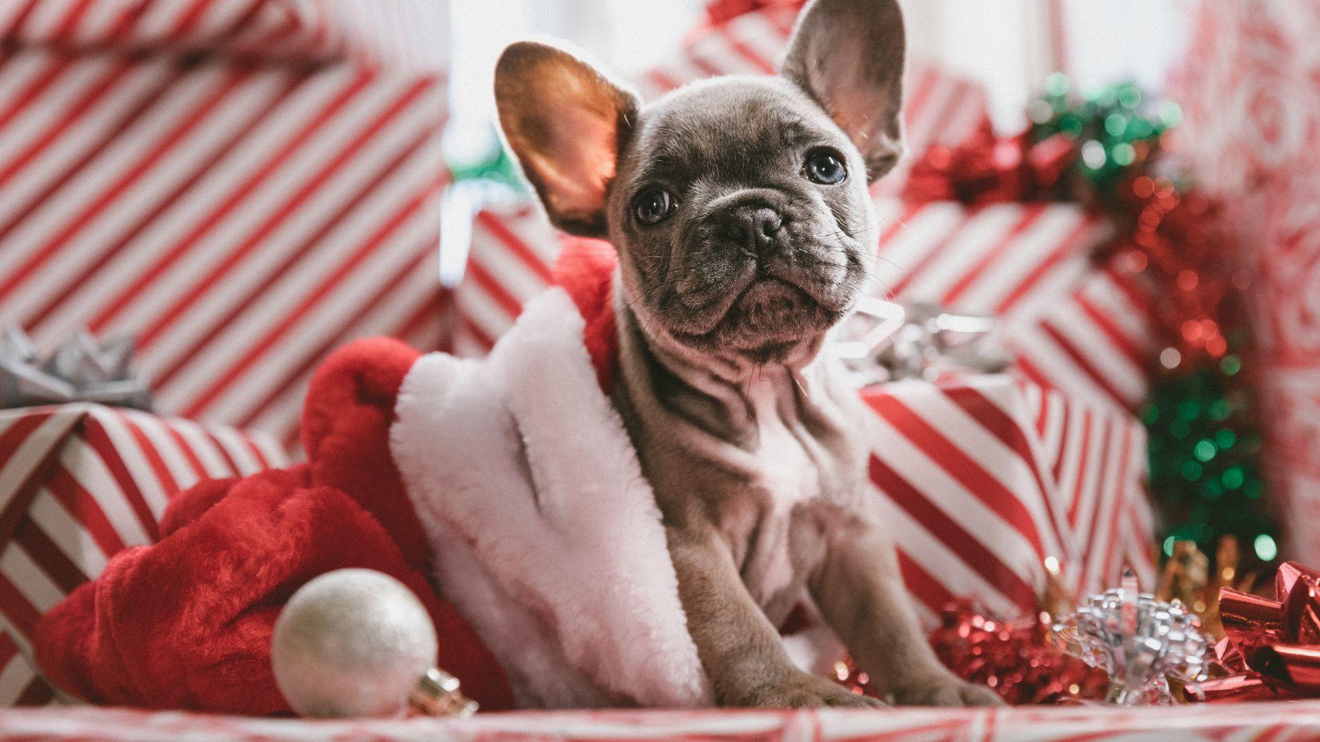 Новогодние картинки год собаки и свиньи