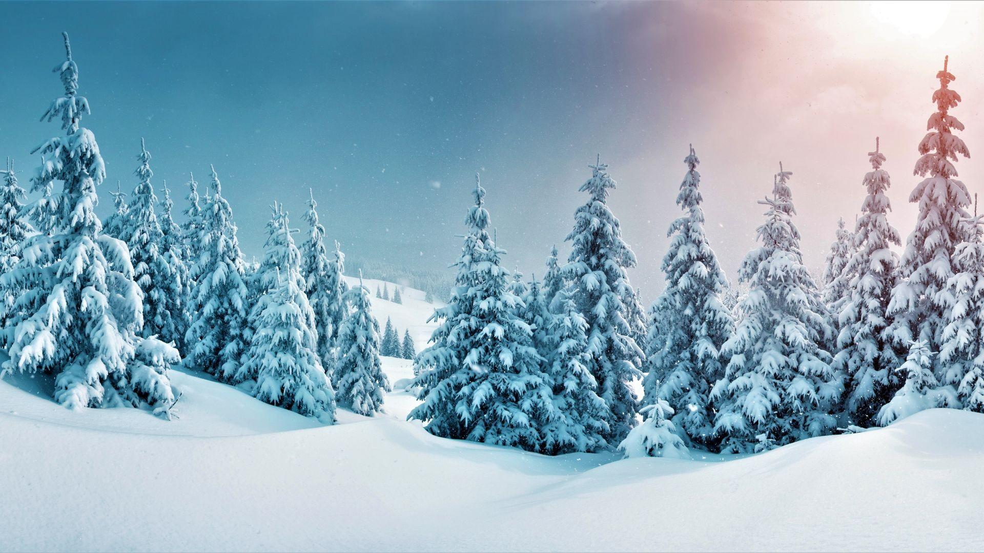 зима, forest, trees, snow, winter, 5k (horizontal)