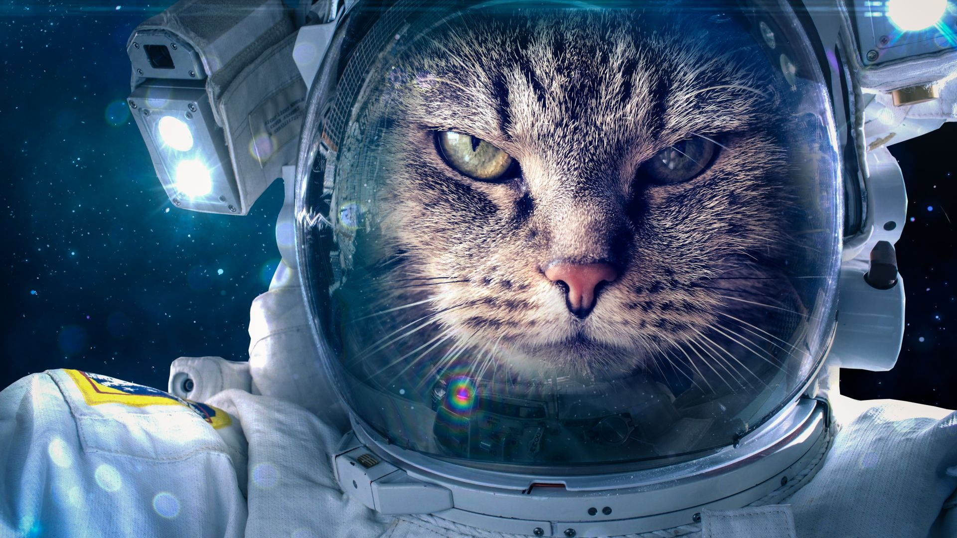 Кот, космонавт, Astronaut, Funny animals, Cat, 5K (horizontal)