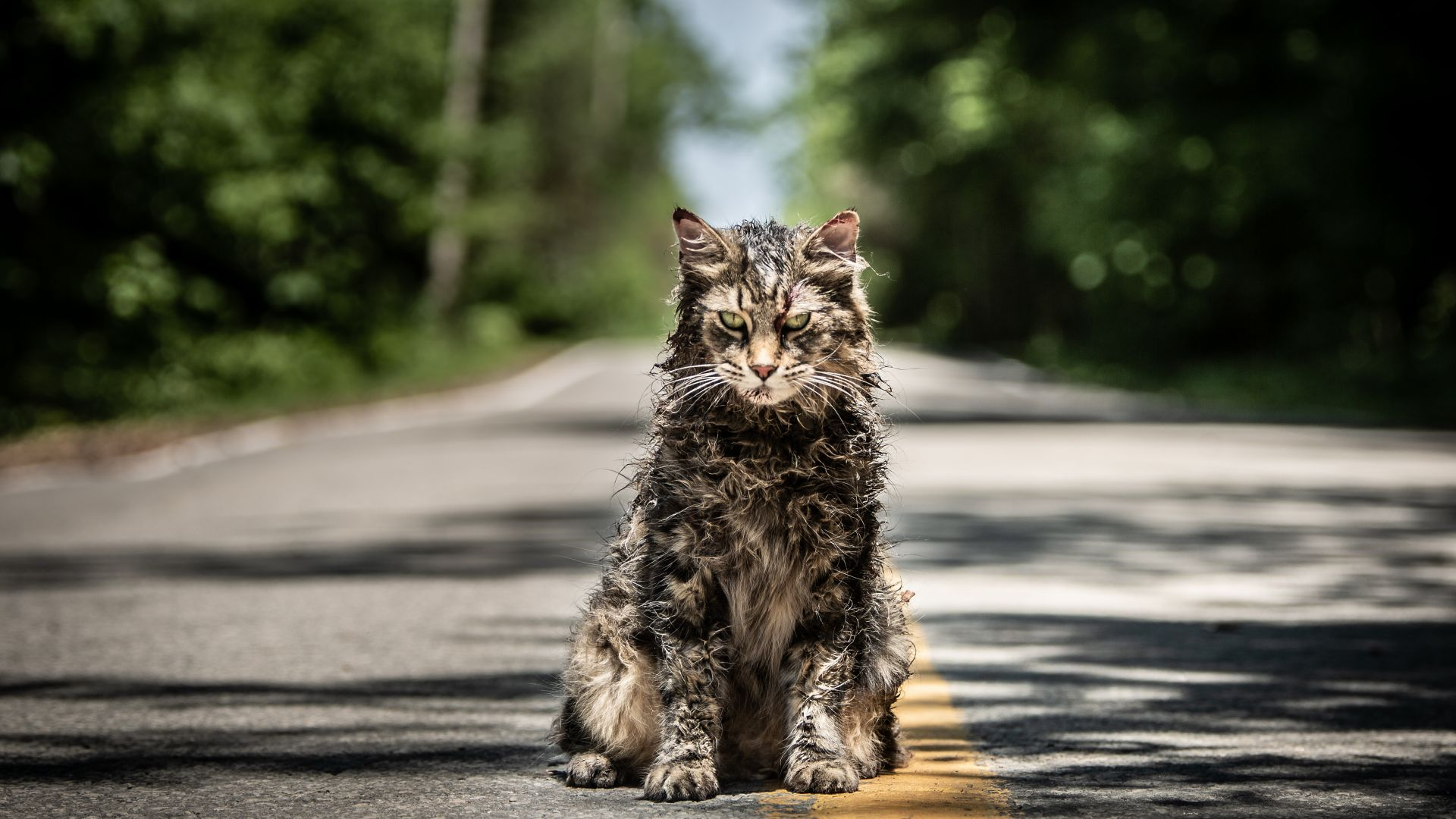 Image result for pet sematary 2019 cat