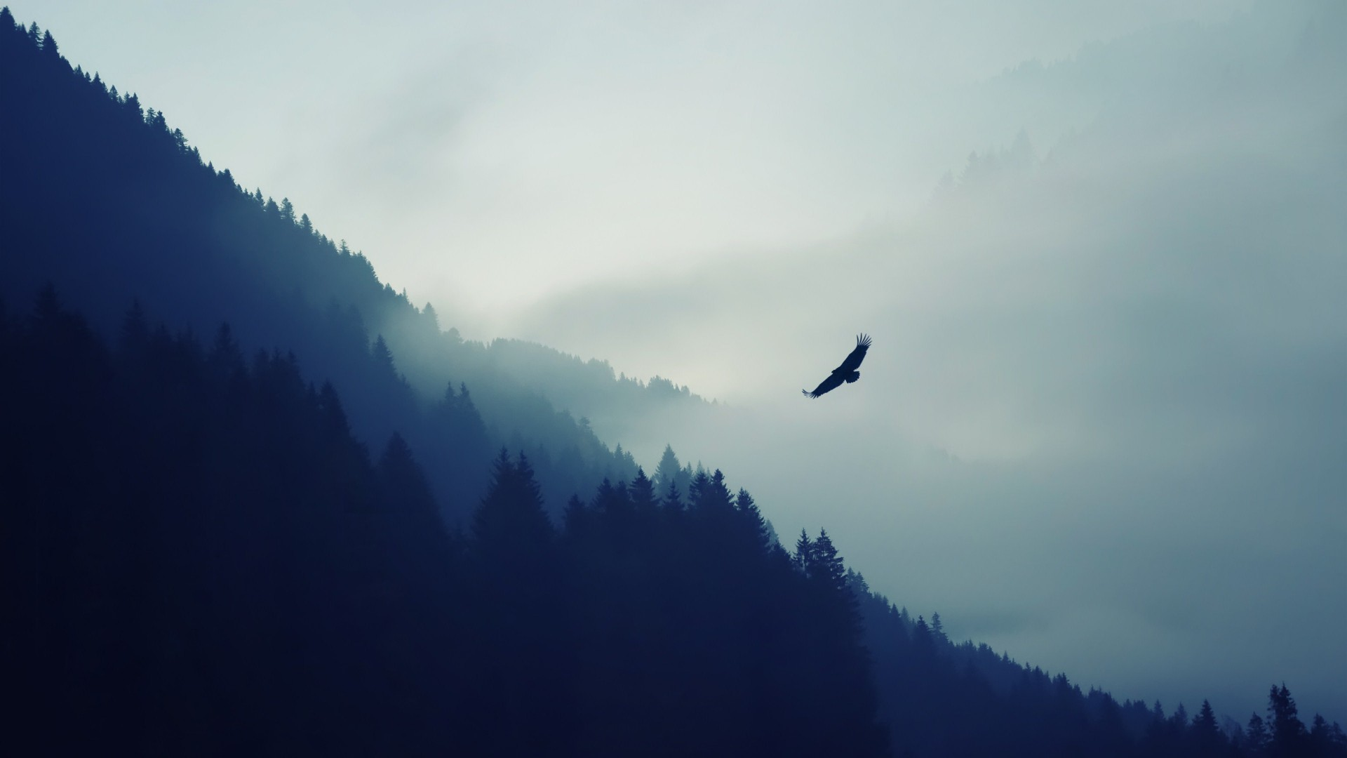 лес, 5k, 4k, туман, орел, обои, forest, 5k, 4k wallpaper, fog, eagle, landscape, wallpaper (horizontal)