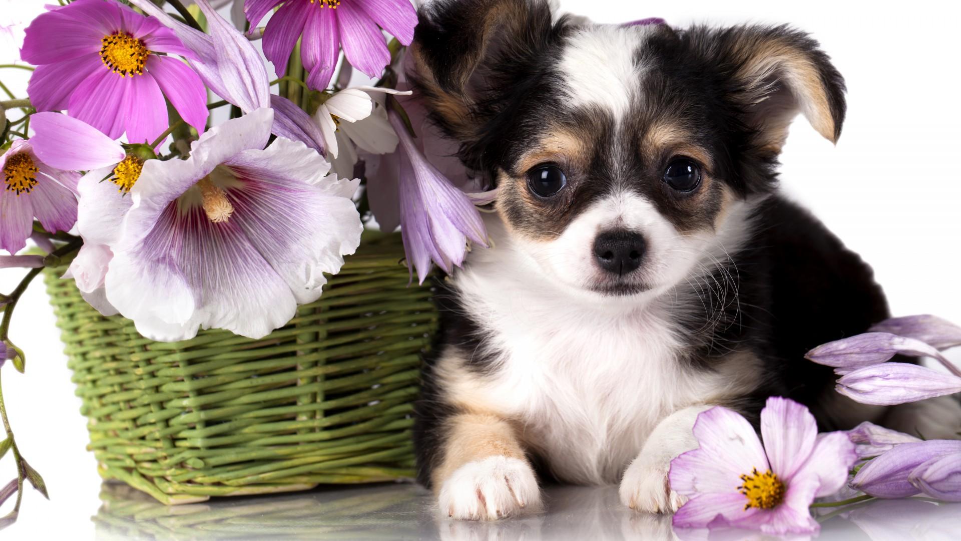Открытки животные и цветы 62