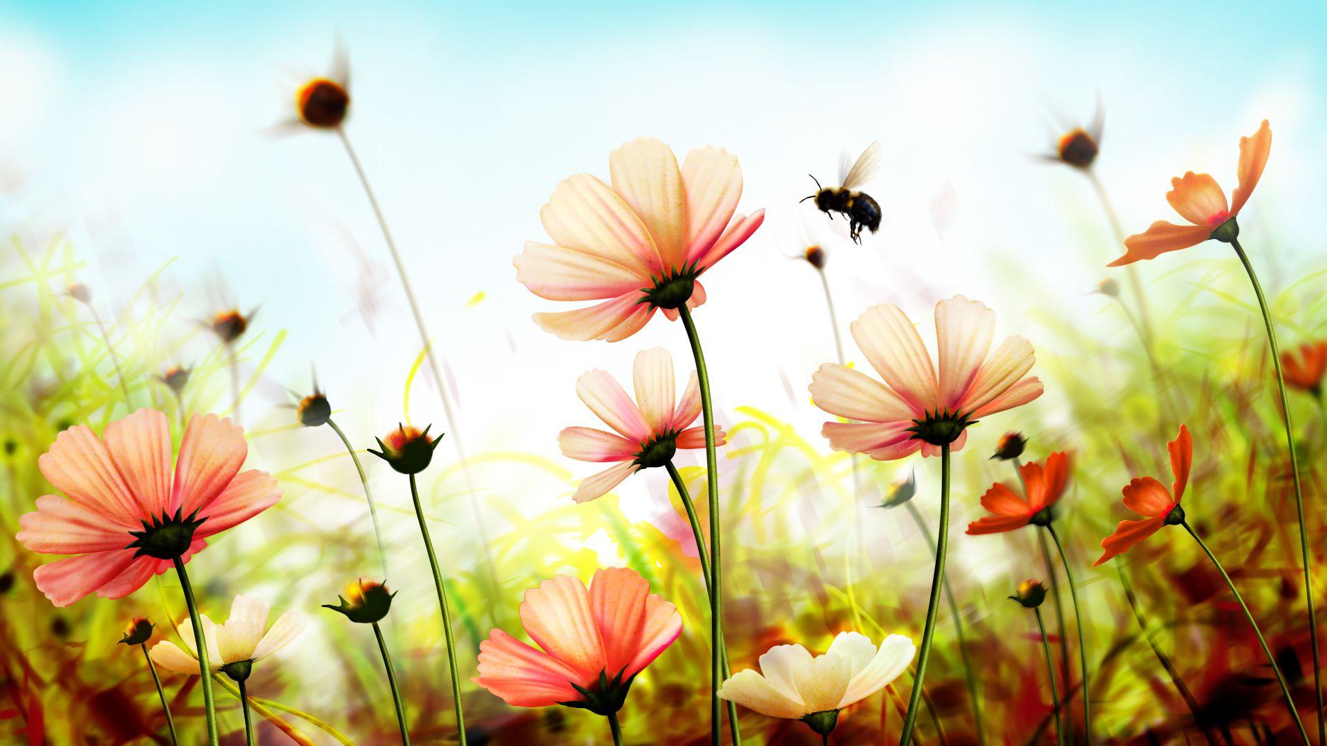 обои на рабочий стол весна лето цветы нее