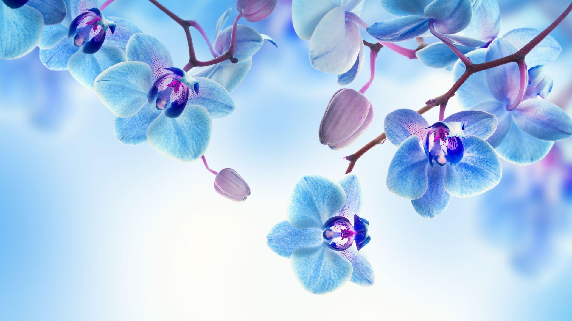 Обои на рабочий стол орхидеи бабочки