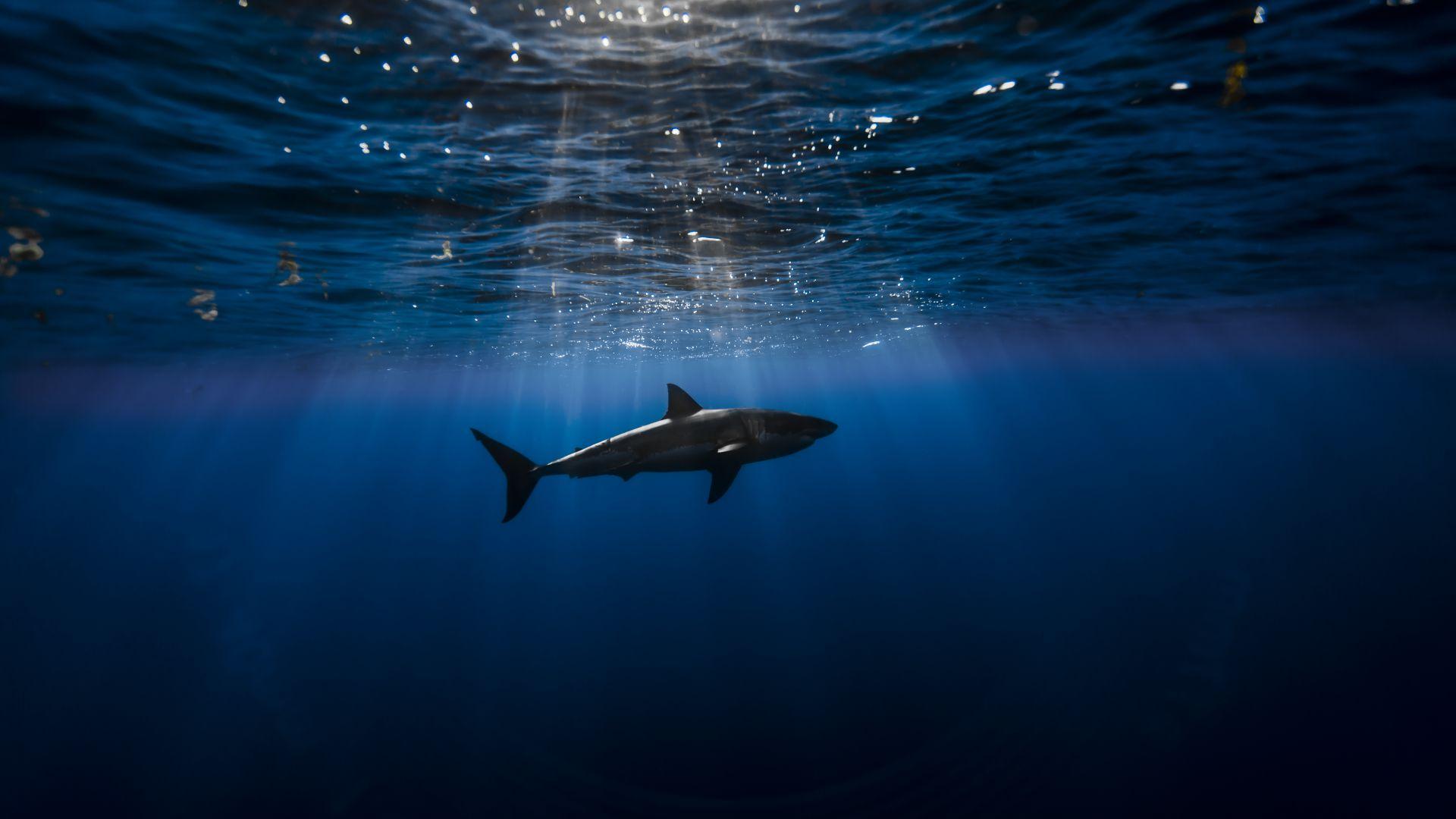 Обои для рабочего стола рыбы акула