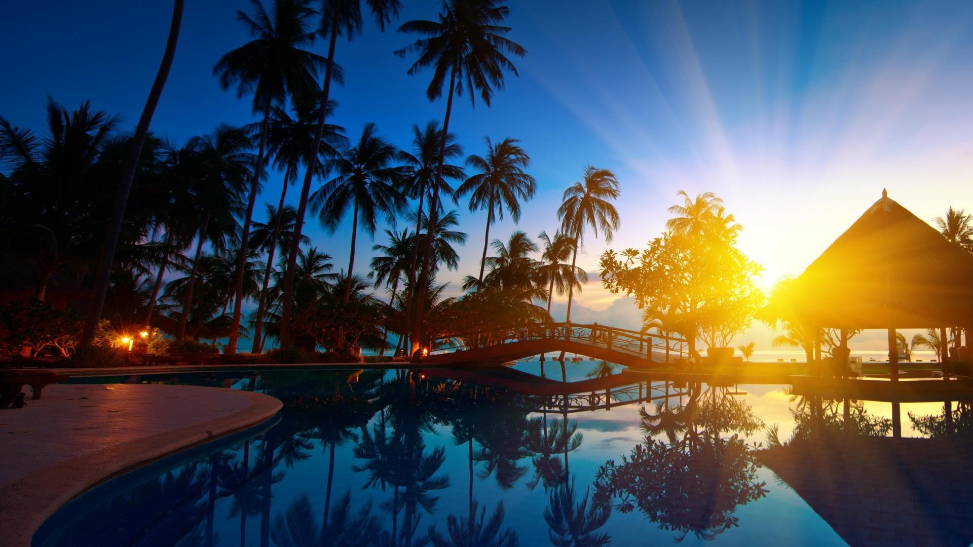 восход над пальмами