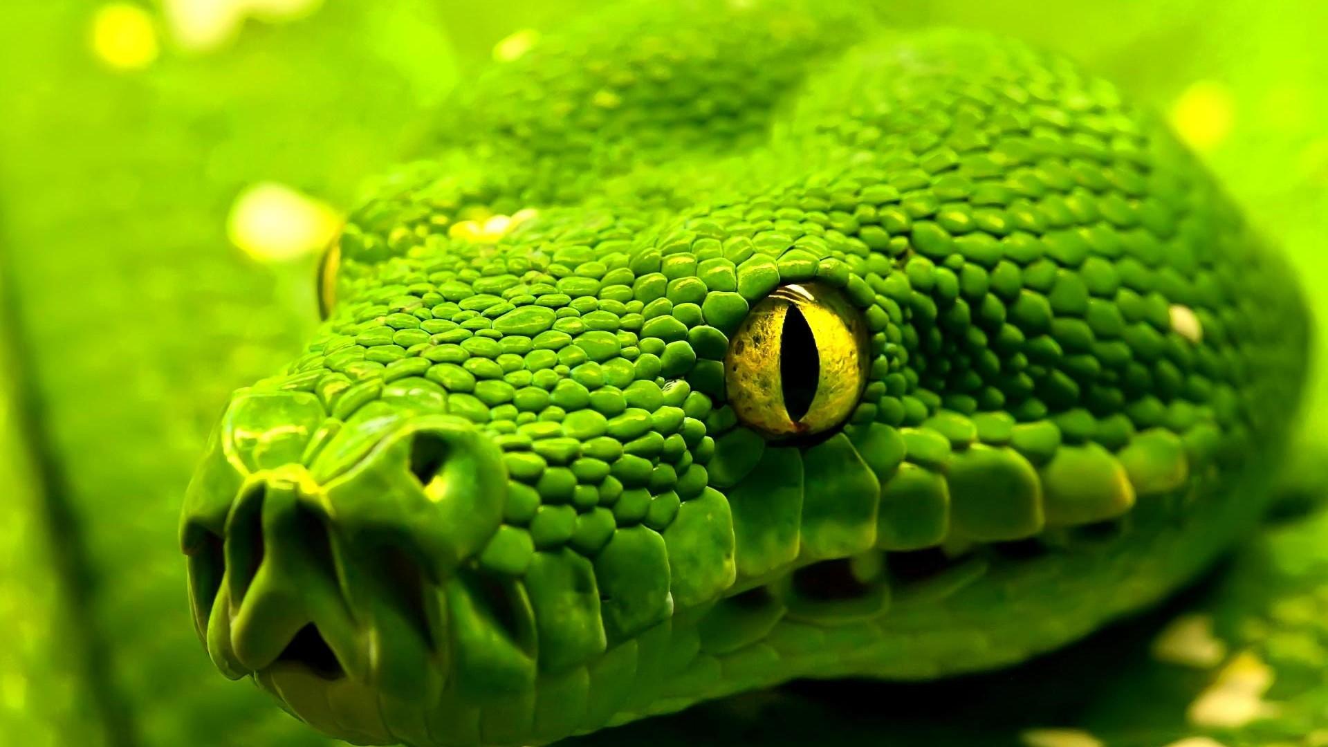 можно ли змеям зеленый свет расскажем Вам том