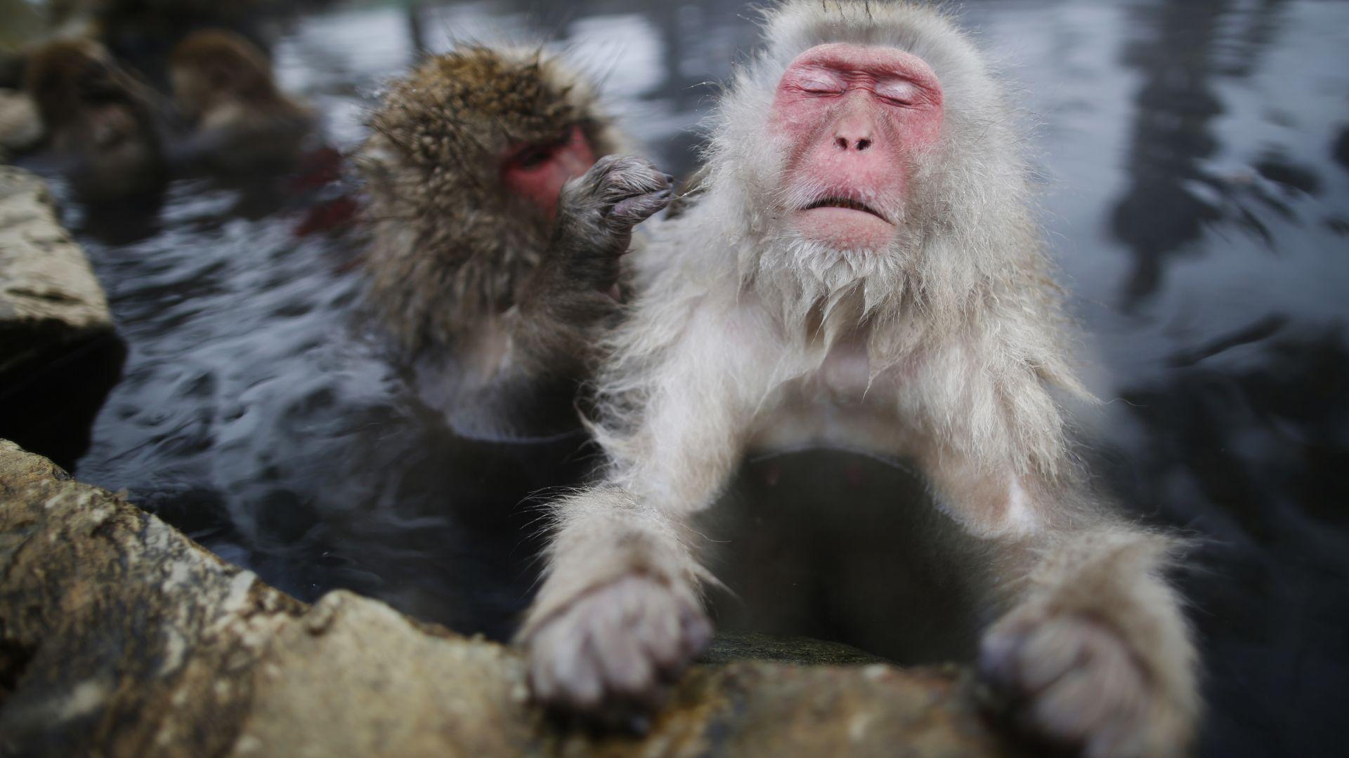 челябинские обезьяны и вода картинки что именно этой