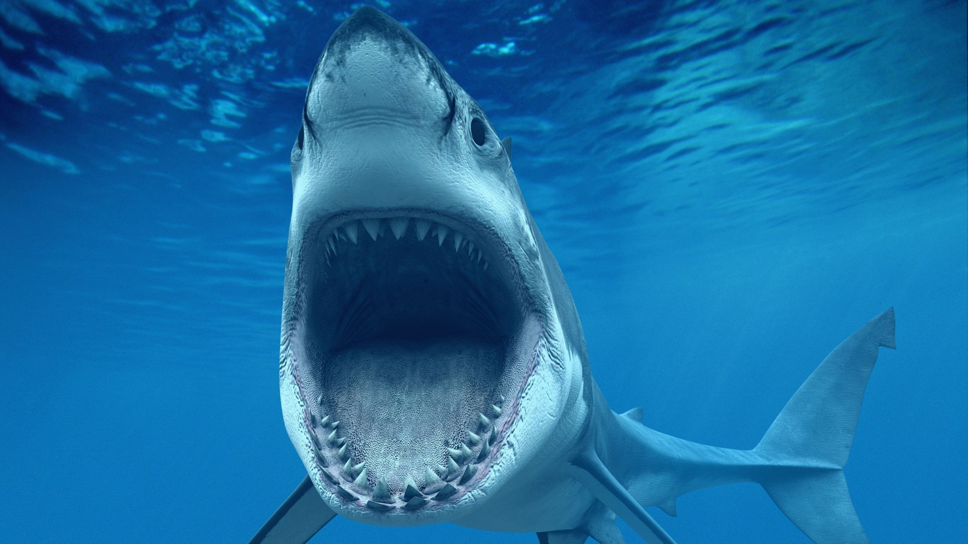 Shark Fishing - A Guide to Fishing for Shark From the Surf Great white shark fishing pictures