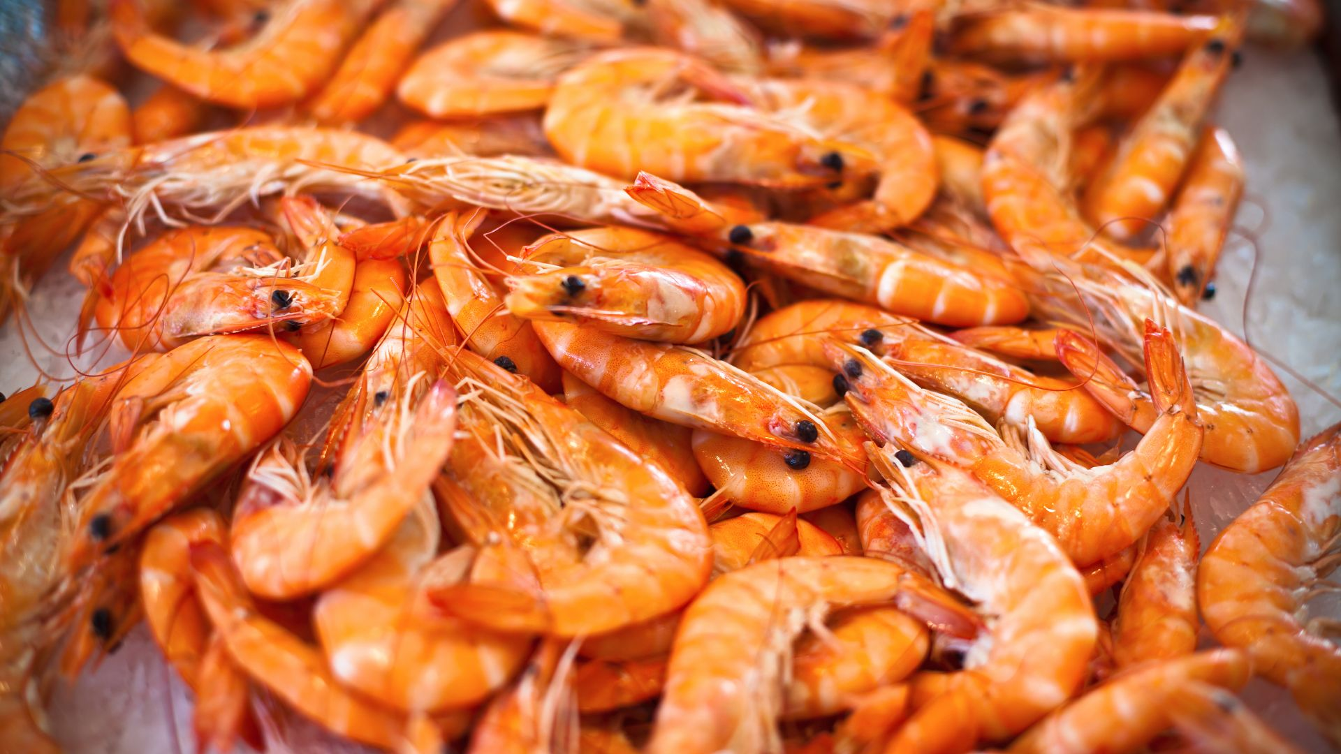 криветки, shrimp (horizontal)