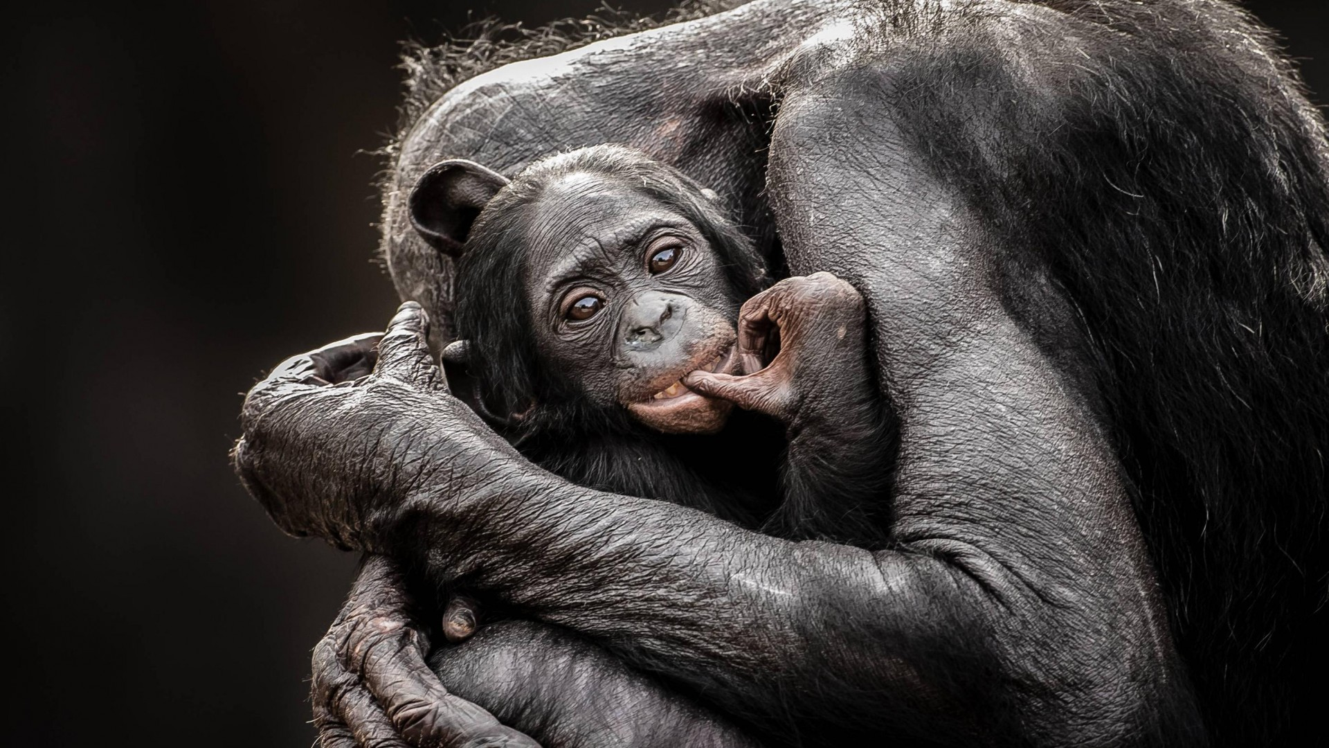 , National Geographics, Monkey, Baby, Hugs (horizontal)