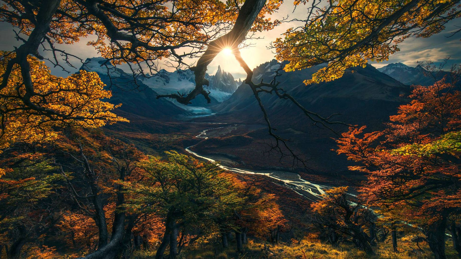 лес, дерево, горы, осень, forest, tree, mountains, autumn, HD (horizontal)