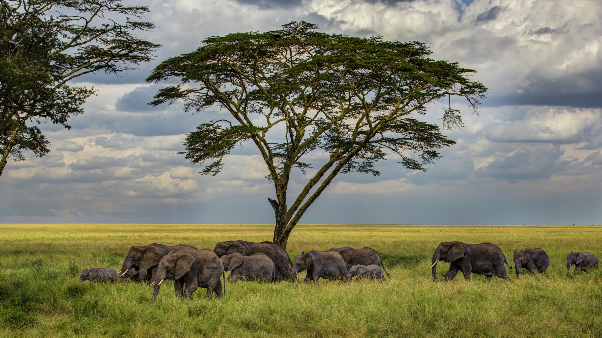 Слон, 5k, 4k, саванны, дерево, облака, Elephant, 5k, 4k wallpaper, savanna, tree, clouds (horizontal)