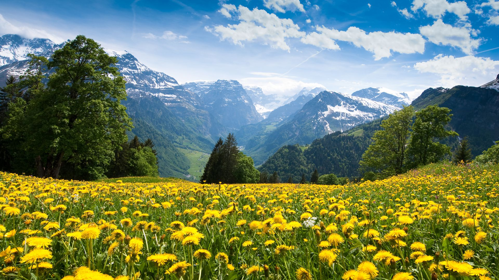 Альпы, Франция, горы, одуванчик, луга, небо, Alps, France, mountains, dandelion, meadows, sky