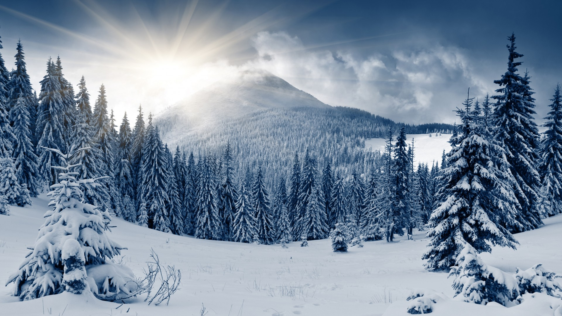 зимний лес, 5k, 4k, гора, солнце, снег, елки, winter forest, 5k, 4k wallpaper, mountain, sun, snow, fir-trees (horizontal)