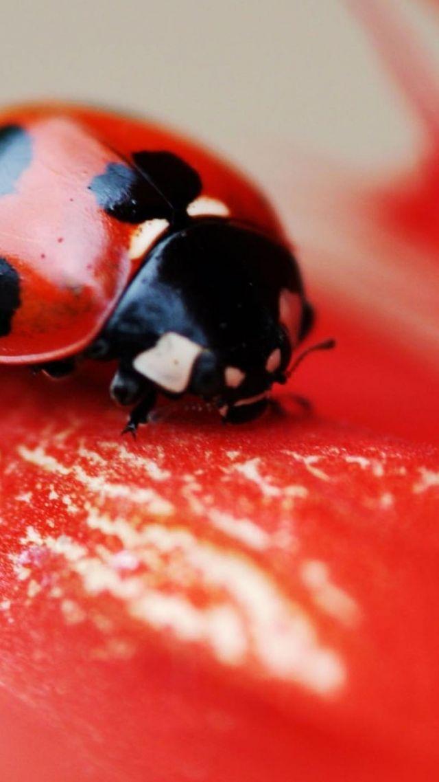 тойота жук фото