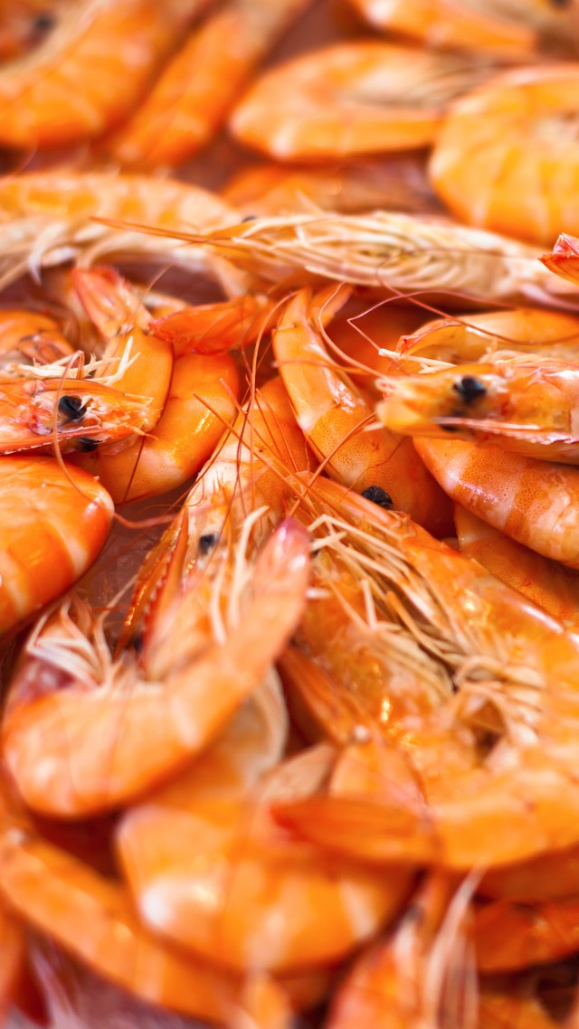 криветки, shrimp (vertical)