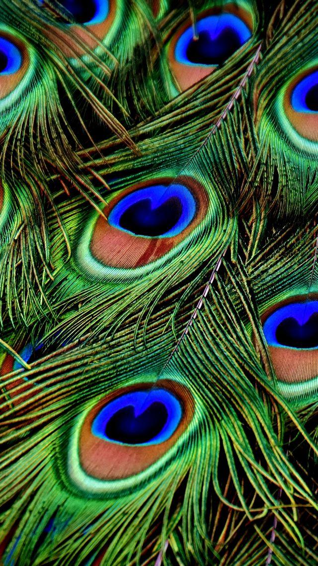 фото перья Peacock Feather 4k фото 17014