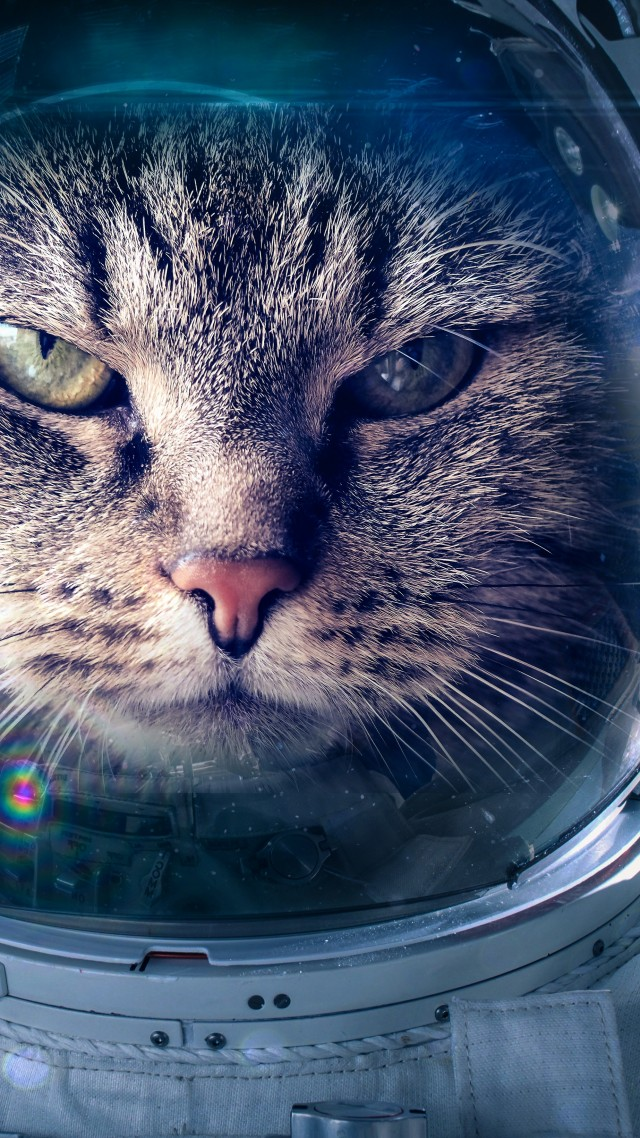 Кот, космонавт, Astronaut, Funny animals, Cat, 5K (vertical)