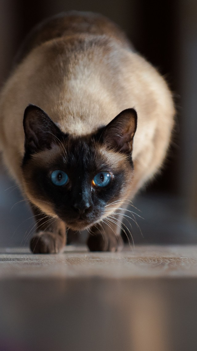 кот, cat, cute animals, 4K (vertical)