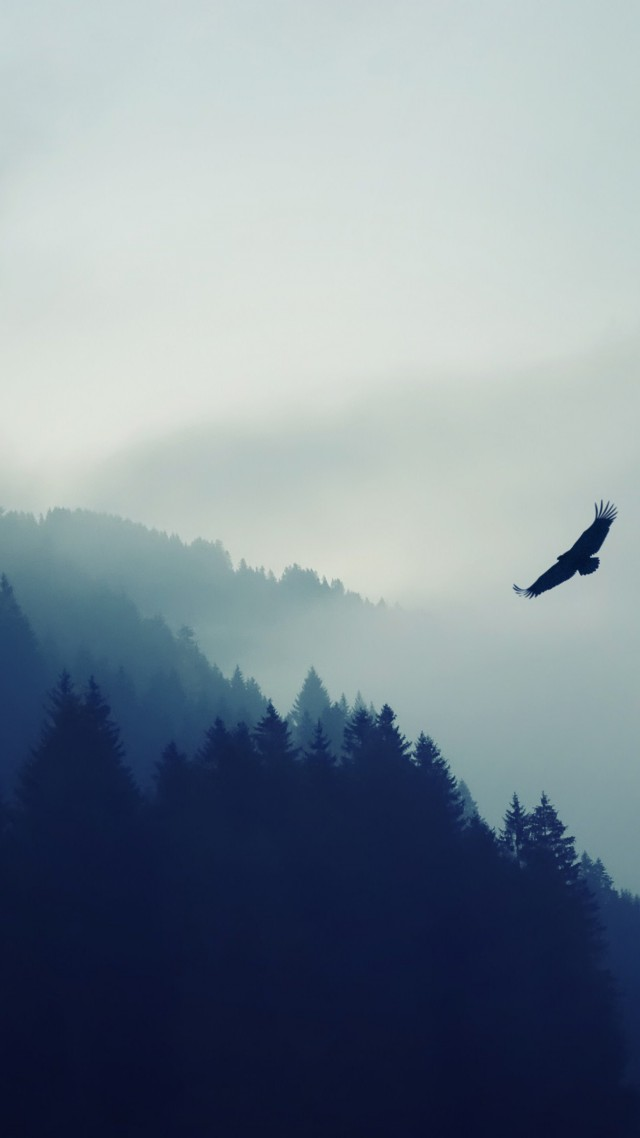 лес, 5k, 4k, туман, орел, обои, forest, 5k, 4k wallpaper, fog, eagle, landscape, wallpaper (vertical)