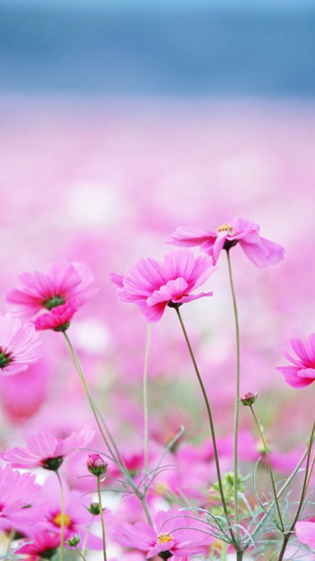 Картинки на телефон полевые цветы