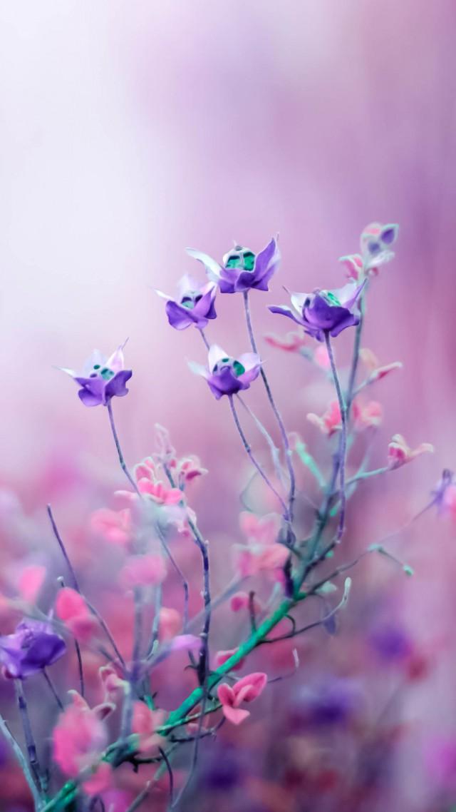 Обои hd на телефон цветы