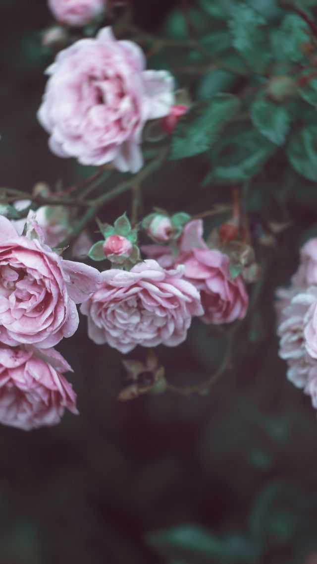Обои на айфон цветы