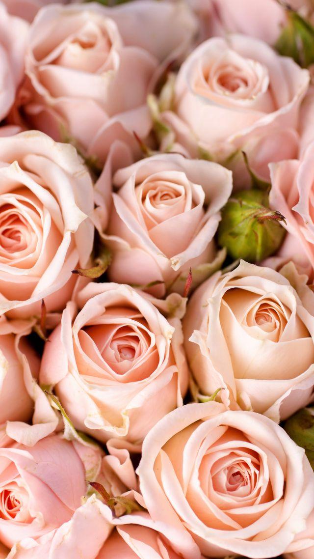 Обои на айфон 7 розовые 4