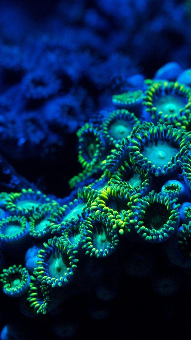 обои коралл 5k 4k 8k зоантарии водой Coral 5k 4k
