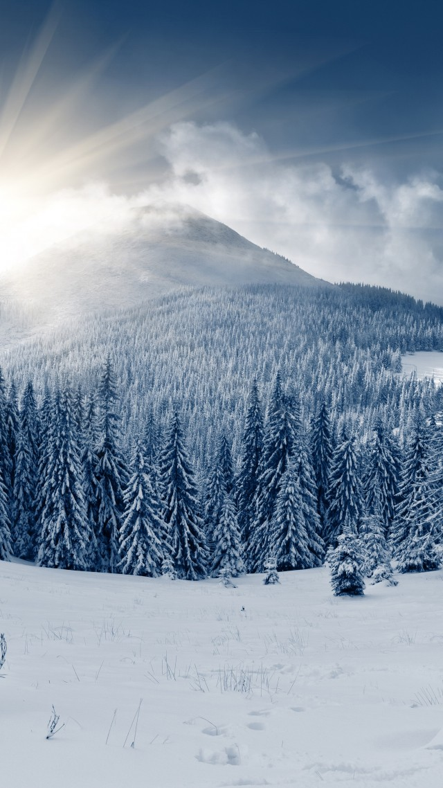 зимний лес, 5k, 4k, гора, солнце, снег, елки, winter forest, 5k, 4k wallpaper, mountain, sun, snow, fir-trees (vertical)