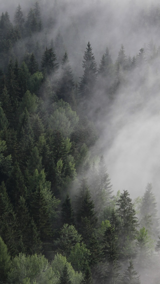 Австрия, 4k, 5k, 8k, лес, туман, сосны, Austria, 4k, 5k wallpaper, 8k, forest, fog, mist, pines (vertical)