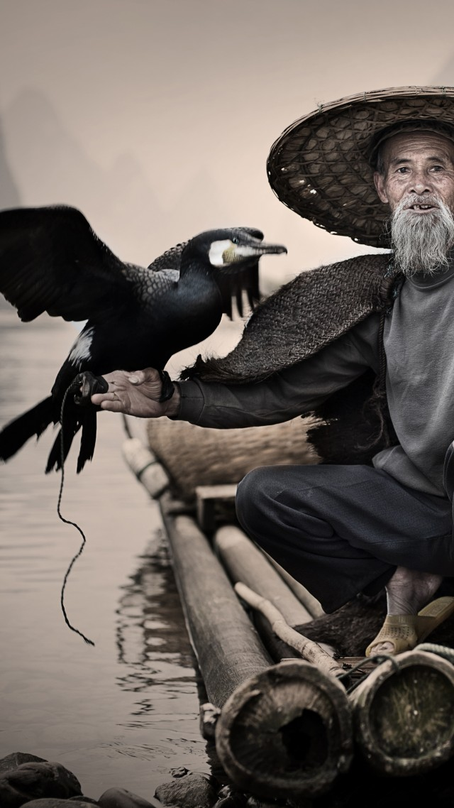 Баклан, Синпин, Китай, птица, Cormorant, Li-River, Xingping, China, fishing village, bird, National Geographic Traveler Photo Contest (vertical)