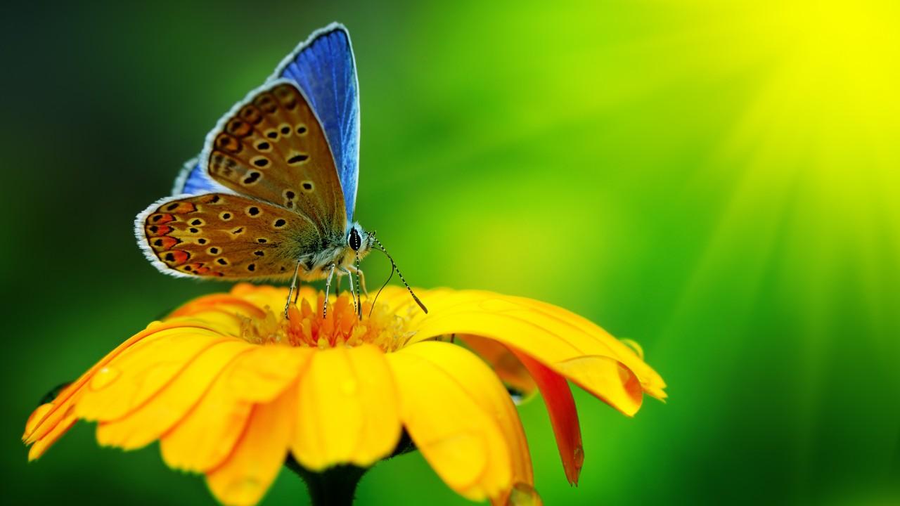Обои насекомое, цветы. Природа foto 10