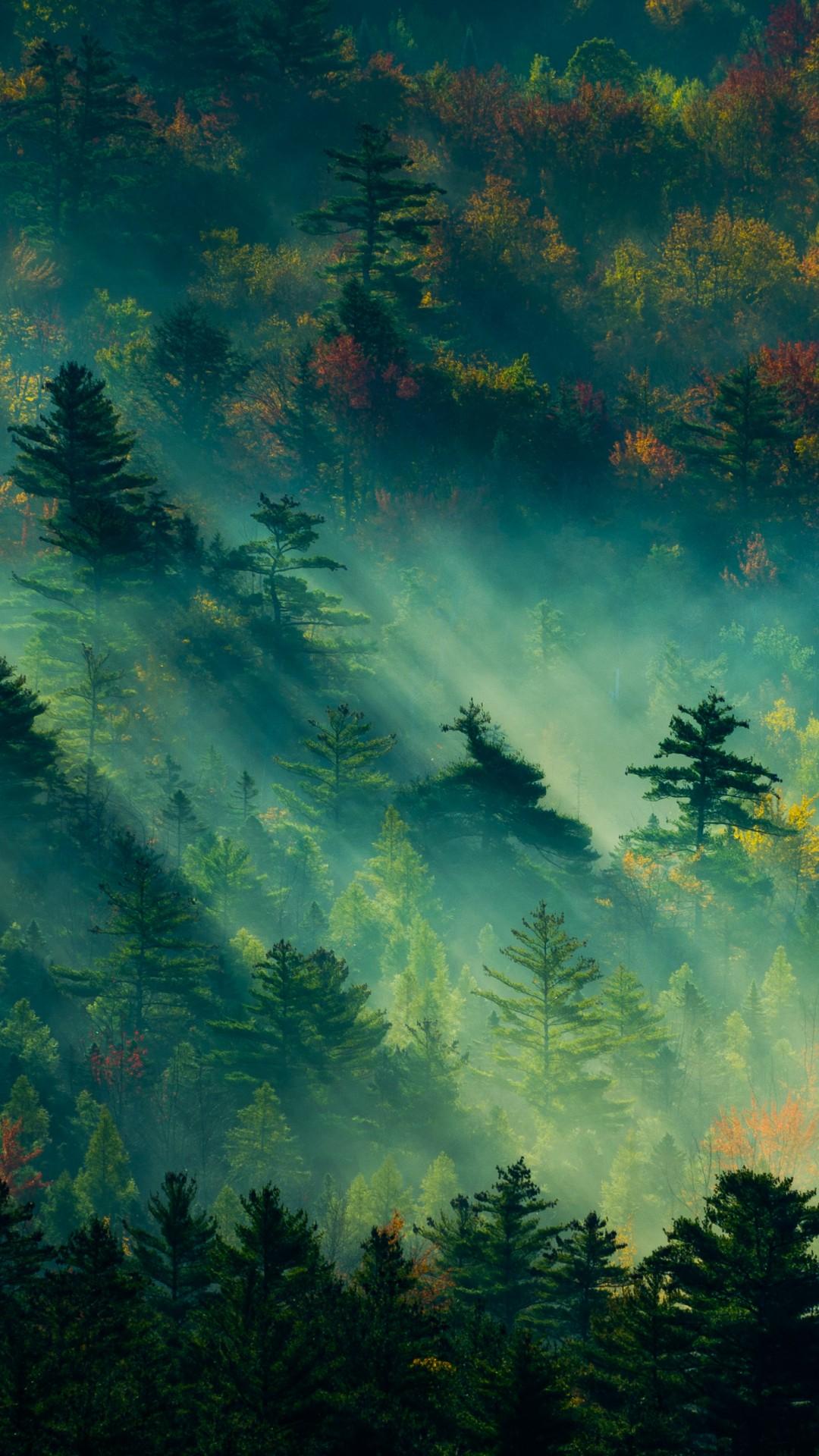 Осень луга